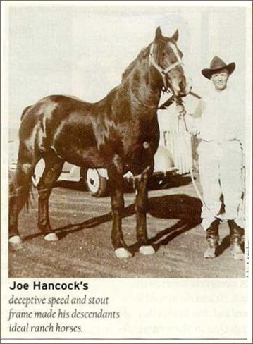 'Joe Hancock's deceptive speed and stout frame made his descendants ideal ranch horses.'