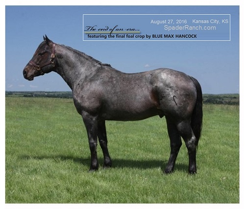Hancock Horse Breeders Classified Ads