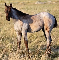 visit Driftwood Horses Breeder Directory