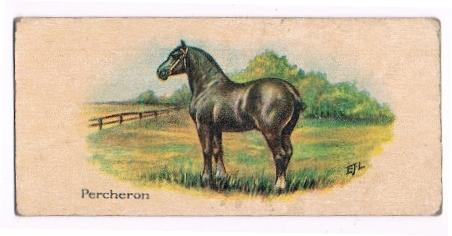 1920's Percheron collectible  information card