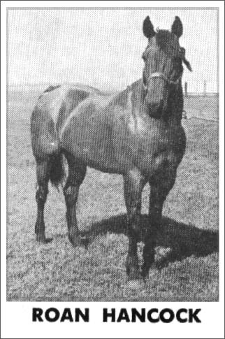 another old photo of Roan Hancock, sired by Joe Hancock